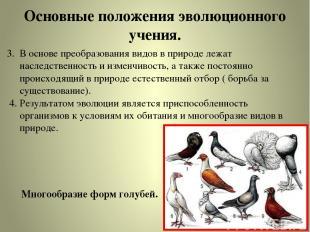 Основные положения эволюционного учения. 3. В основе преобразования видов в прир