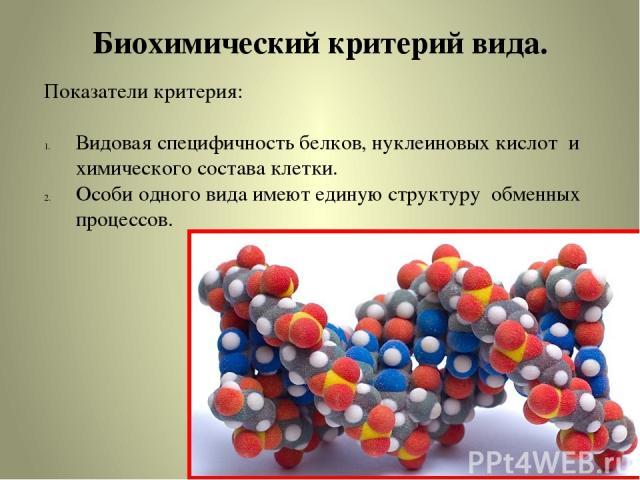 Биохимический критерий вида. Показатели критерия: Видовая специфичность белков, нуклеиновых кислот и химического состава клетки. Особи одного вида имеют единую структуру обменных процессов.