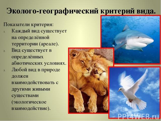 Эколого-географический критерий вида. Показатели критерия: Каждый вид существует на определённой территории (ареале). Вид существует в определённых абиотических условиях. Любой вид в природе должен взаимодействовать с другими живыми существами (экол…