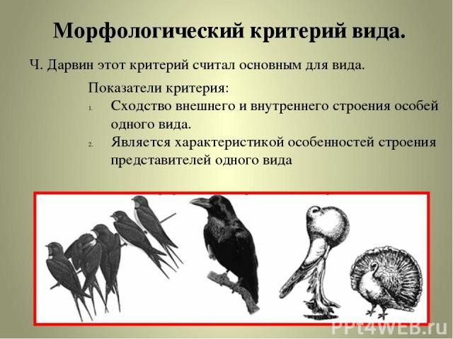 Морфологический критерий вида. Ч. Дарвин этот критерий считал основным для вида. Показатели критерия: Сходство внешнего и внутреннего строения особей одного вида. Является характеристикой особенностей строения представителей одного вида