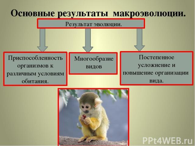 Основные результаты макроэволюции. Результат эволюции. Приспособленность организмов к различным условиям обитания. Многообразие видов Постепенное усложнение и повышение организации вида.