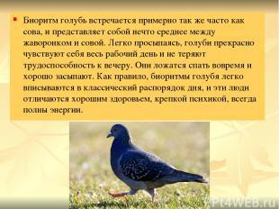 Биоритм голубь встречается примерно так же часто как сова, и представляет собой