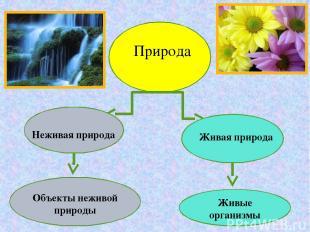 Природа Неживая природа Живая природа Живые организмы Объекты неживой природы