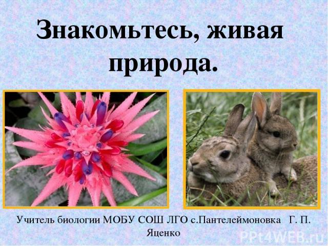 Знакомьтесь, живая природа. Учитель биологии МОБУ СОШ ЛГО с.Пантелеймоновка Г. П. Яценко