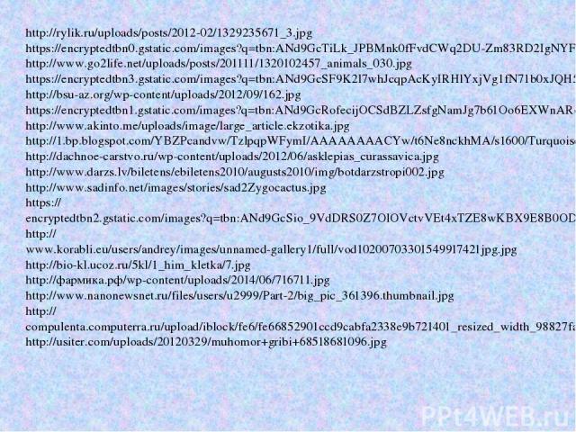 http://rylik.ru/uploads/posts/2012-02/1329235671_3.jpg https://encryptedtbn0.gstatic.com/images?q=tbn:ANd9GcTiLk_JPBMnk0fFvdCWq2DU-Zm83RD2IgNYFQ7Z-uS8a9vPUAaH7A http://www.go2life.net/uploads/posts/201111/1320102457_animals_030.jpg https://encrypted…