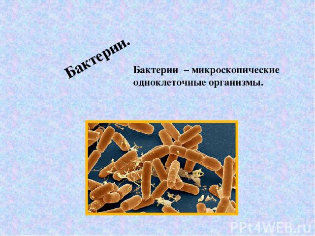 Бактерии. Бактерии – микроскопические одноклеточные организмы.