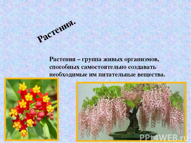 Растения. Растения – группа живых организмов, способных самостоятельно создавать необходимые им питательные вещества.