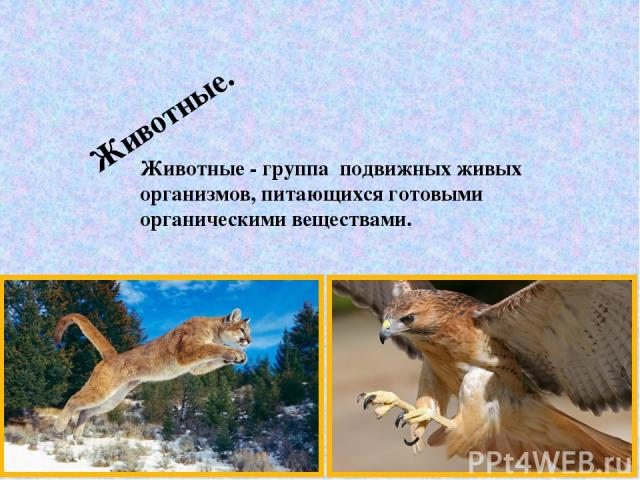 Животные. Животные - группа подвижных живых организмов, питающихся готовыми органическими веществами.