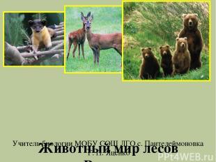Животный мир лесов России. Учитель биологии МОБУ СОШ ЛГО с. Пантелеймоновка Г. П