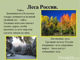 Леса России. Тайга. Заканчивается безлесная тундра, начинается великий хвойный л