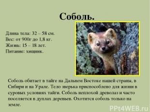 Соболь. Длина тела: 32 – 58 см. Вес: от 900г до 1,8 кг. Жизнь: 15 – 18 лет. Пита