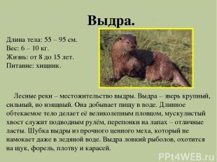 Выдра. Длина тела: 55 – 95 см. Вес: 6 – 10 кг. Жизнь: от 8 до 15 лет. Питание: х