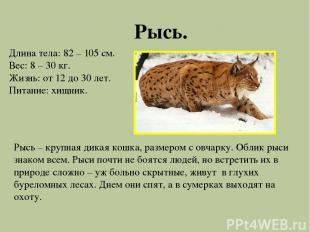 Рысь. Длина тела: 82 – 105 см. Вес: 8 – 30 кг. Жизнь: от 12 до 30 лет. Питание: