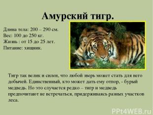 Амурский тигр. Длина тела: 200 – 290 см. Вес: 100 до 250 кг. Жизнь : от 15 до 25