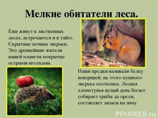 Мелкие обитатели леса. Ежи живут в лиственных лесах, встречаются и в тайге. Скры