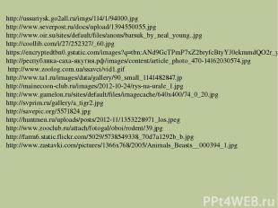 http://ussuriysk.go2all.ru/imgs/114/1/94000.jpg http://www.severpost.ru/docs/upl