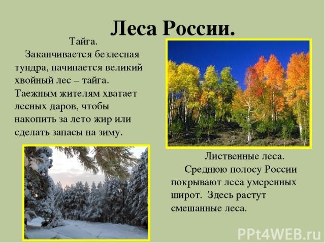 Леса России. Тайга. Заканчивается безлесная тундра, начинается великий хвойный лес – тайга. Таежным жителям хватает лесных даров, чтобы накопить за лето жир или сделать запасы на зиму. Лиственные леса. Среднюю полосу России покрывают леса умеренных …