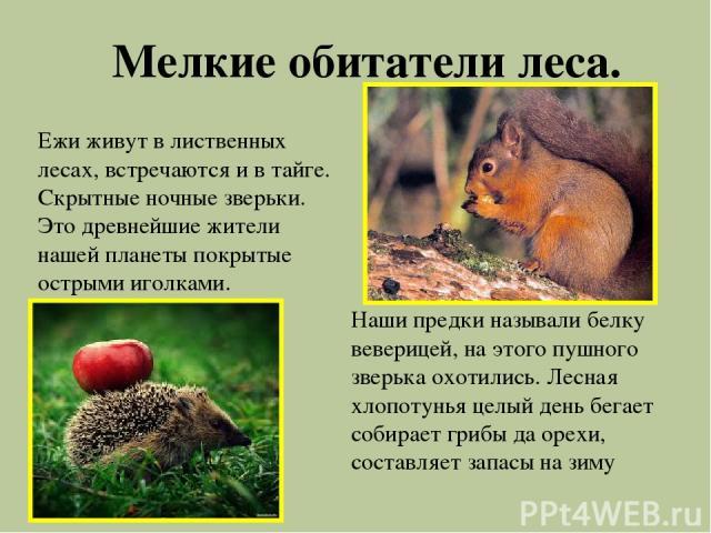 Мелкие обитатели леса. Ежи живут в лиственных лесах, встречаются и в тайге. Скрытные ночные зверьки. Это древнейшие жители нашей планеты покрытые острыми иголками. Наши предки называли белку веверицей, на этого пушного зверька охотились. Лесная хлоп…