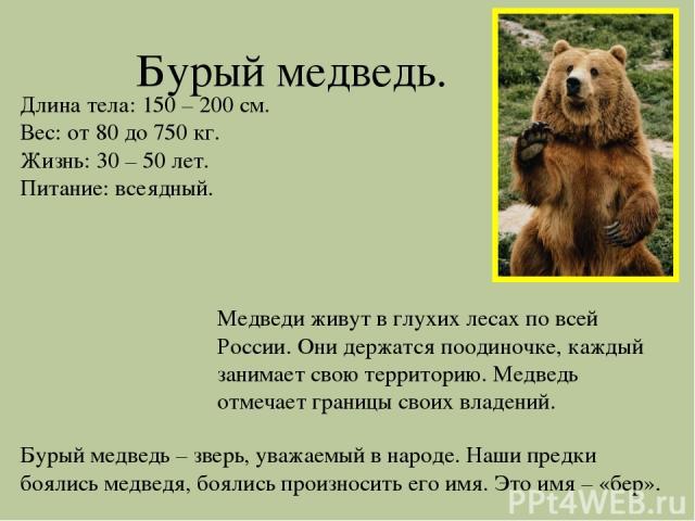 Бурый медведь. Длина тела: 150 – 200 см. Вес: от 80 до 750 кг. Жизнь: 30 – 50 лет. Питание: всеядный. Медведи живут в глухих лесах по всей России. Они держатся поодиночке, каждый занимает свою территорию. Медведь отмечает границы своих владений. Бур…