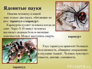 Ядовитые пауки Опасны человеку в нашей зоне только два паука, обитающие на юге: