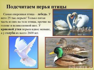 Подсчитаем перья птицы Самая оперенная птица – лебедь. У него 25 тыс.перьев! Тол