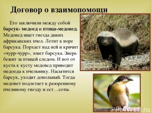 Договор о взаимопомощи Его заключили между собой барсук- медоед и птица-медовед.