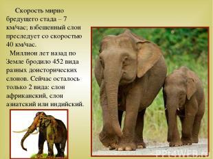 Скорость мирно бредущего стада – 7 км/час; взбешенный слон преследует со скорост