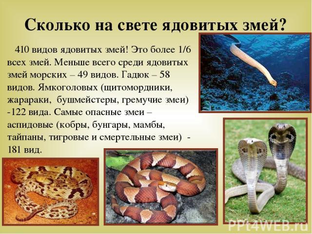 Сколько на свете ядовитых змей? 410 видов ядовитых змей! Это более 1/6 всех змей. Меньше всего среди ядовитых змей морских – 49 видов. Гадюк – 58 видов. Ямкоголовых (щитомордники, жарараки, бушмейстеры, гремучие змеи) -122 вида. Самые опасные змеи –…