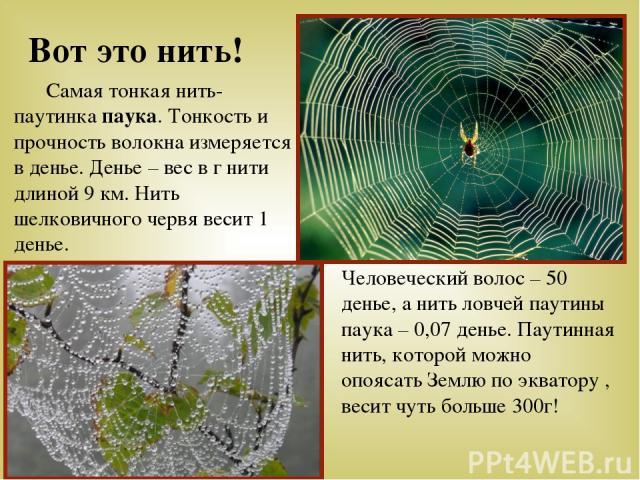 Вот это нить! Самая тонкая нить- паутинка паука. Тонкость и прочность волокна измеряется в денье. Денье – вес в г нити длиной 9 км. Нить шелковичного червя весит 1 денье. Человеческий волос – 50 денье, а нить ловчей паутины паука – 0,07 денье. Паути…