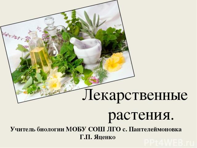 Учитель биологии МОБУ СОШ ЛГО с. Пантелеймоновка Г.П. Яценко Лекарственные растения.