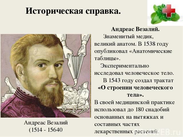 Историческая справка. Андреас Везалий. Знаменитый медик, великий анатом. В 1538 году опубликовал «Анатомические таблицы». Экспериментально исследовал человеческое тело. В 1543 году создал трактат «О строении человеческого тела». В своей медицинской …