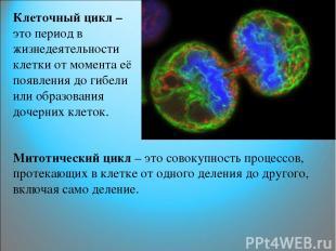 Клеточный цикл – это период в жизнедеятельности клетки от момента её появления д
