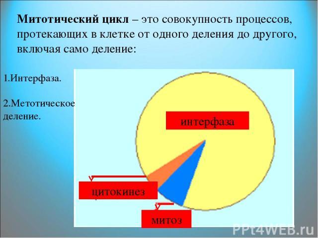 Митотический цикл – это совокупность процессов, протекающих в клетке от одного деления до другого, включая само деление: интерфаза митоз цитокинез 1.Интерфаза. 2.Метотическое деление.