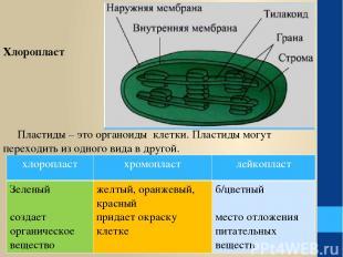 Пластиды – это органоиды клетки. Пластиды могут переходить из одного вида в друг
