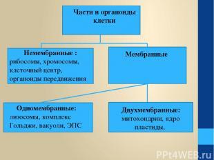 Части и органоиды клетки Немембранные : рибосомы, хромосомы, клеточный центр, ор