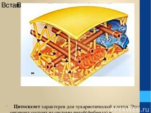 ЦИТОСКЕЛЕТ Цитоскелет характерен для эукариотической клетки. Этот органоид состо