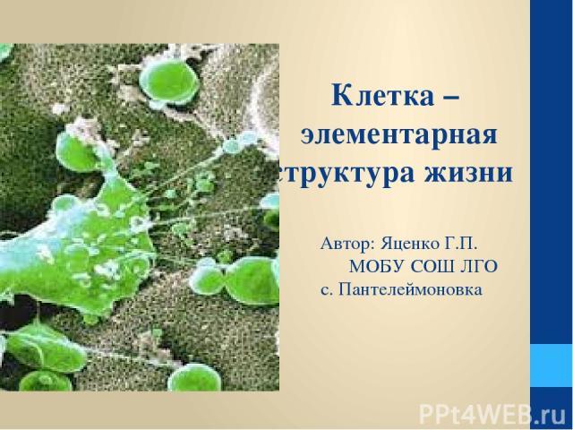 Клетка – элементарная структура жизни Автор: Яценко Г.П. МОБУ СОШ ЛГО с. Пантелеймоновка
