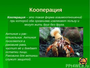 Кооперация Кооперация – это такая форма взаимоотношений при которой оба организм