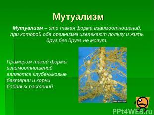 Мутуализм Мутуализм – это такая форма взаимоотношений, при которой оба организма