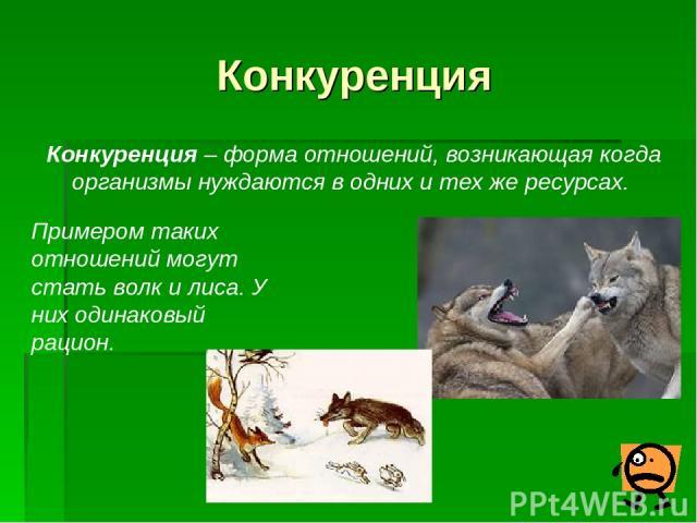 Конкуренция Конкуренция – форма отношений, возникающая когда организмы нуждаются в одних и тех же ресурсах. Примером таких отношений могут стать волк и лиса. У них одинаковый рацион.