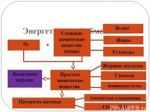 Энергетический обмен. Итог. О2 + Сложные химические вещества (пища) Белки Жиры У