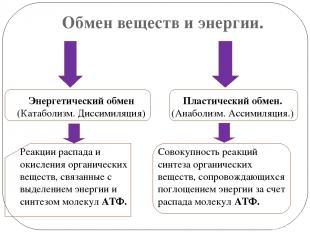 Обмен веществ и энергии. Энергетический обмен (Катаболизм. Диссимиляция) Реакции
