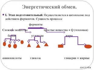 Энергетический обмен. I. Этап подготовительный. Осуществляется в цитоплазме под