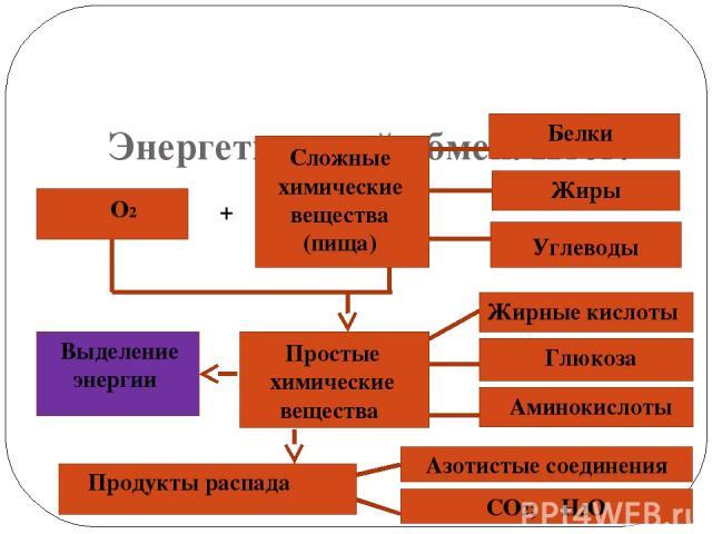 Энергетический обмен. Итог. О2 + Сложные химические вещества (пища) Белки Жиры Углеводы Выделение энергии Простые химические вещества Продукты распада Жирные кислоты Глюкоза Аминокислоты Азотистые соединения СО2; Н2О