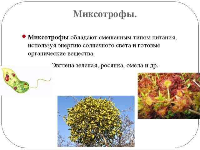 Миксотрофы. Миксотрофы обладают смешенным типом питания, используя энергию солнечного света и готовые органические вещества. Эвглена зеленая, росянка, омела и др.