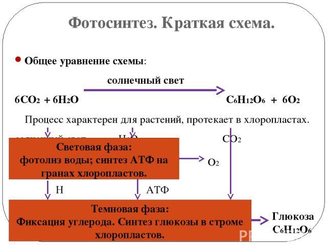 Фотосинтез. Краткая схема. Общее уравнение схемы: солнечный свет 6СО2 + 6Н2О С6Н12О6 + 6О2 Процесс характерен для растений, протекает в хлоропластах. солнечный свет Н2О СО2 Световая фаза: фотолиз воды; синтез АТФ на гранах хлоропластов. О2 Н АТФ Тем…