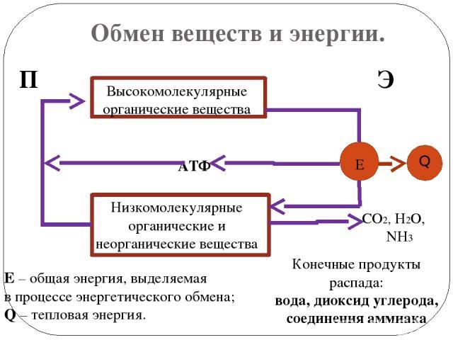 Обмен веществ и энергии. П Э АТФ Высокомолекулярные органические вещества н Низкомолекулярные органические и неорганические вещества Е СО2, Н2О, NH3 Е – общая энергия, выделяемая в процессе энергетического обмена; Q – тепловая энергия. Конечные прод…