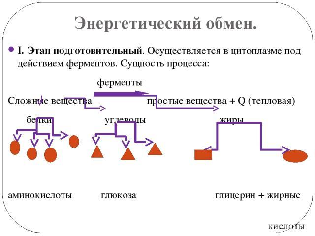 Энергетический обмен. I. Этап подготовительный. Осуществляется в цитоплазме под действием ферментов. Сущность процесса: ферменты Сложные вещества простые вещества + Q (тепловая) белки углеводы жиры аминокислоты глюкоза глицерин + жирные кислоты Энер…