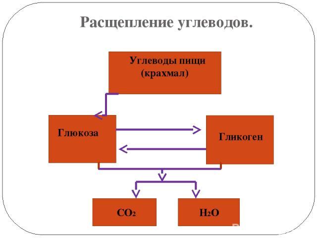 Расщепление углеводов. Углеводы пищи (крахмал) Глюкоза Гликоген СО2 Н2О
