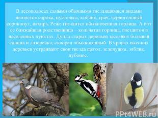 В лесополосах самыми обычными гнездящимися видами являются сорока, пустельга, ко